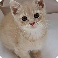 Adopt A Pet :: Carter - Colfax, IA