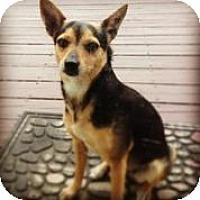 Adopt A Pet :: Nelly - Austin, TX