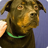 Adopt A Pet :: Maximus Ursa - Martinsville, IN