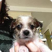 Adopt A Pet :: Chuck - pasadena, CA