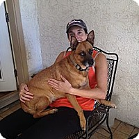 Adopt A Pet :: Aimee - Gilbert, AZ