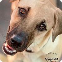 Adopt A Pet :: Honey Dew - Scottsdale, AZ