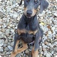 Adopt A Pet :: Sheldon--adopted!! - New Richmond, OH