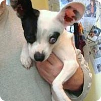 Adopt A Pet :: Ellie - Henderson, KY
