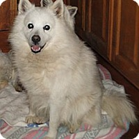 Adopt A Pet :: Frost - Columbus, IN