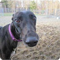 Adopt A Pet :: Sketches (Sketchedinblack) - Chagrin Falls, OH