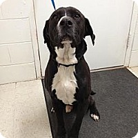 Adopt A Pet :: Chester - Lancaster, VA