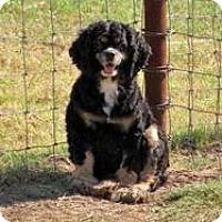 Adopt A Pet :: Hanna - Quinlan, TX