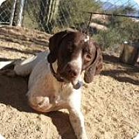 Adopt A Pet :: Van - Scottsdale, AZ