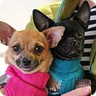 Adopt A Pet :: Peeta & Prim