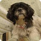 Adopt A Pet :: A420882