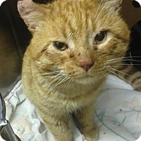 Adopt A Pet :: Mr. Dobalina - Chicago, IL
