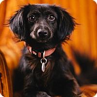 Adopt A Pet :: Aldo - Portland, OR