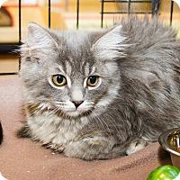 Adopt A Pet :: Lillie - Irvine, CA