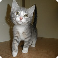 Adopt A Pet :: Xantha - Milwaukee, WI