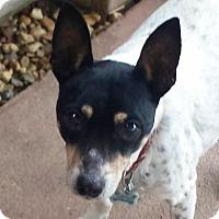 Adopt A Pet :: Sallie Mae (LA) - Baton Rouge, LA