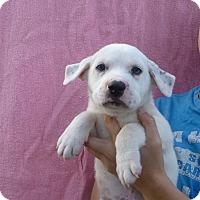 Adopt A Pet :: Rocko - Oviedo, FL