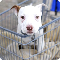 Adopt A Pet :: Hermey-Adopted! - Detroit, MI