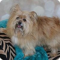 Adopt A Pet :: Copper 2016 - Dallas, TX