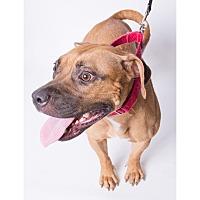 Adopt A Pet :: Lea - Jupiter, FL