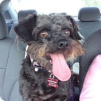 Adopt A Pet :: Jill - Encino, CA