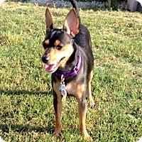 Adopt A Pet :: Julius - Tavares, FL