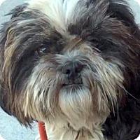 Adopt A Pet :: BLEU (video) - Los Angeles, CA