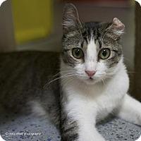 Adopt A Pet :: Vander - Tucson, AZ