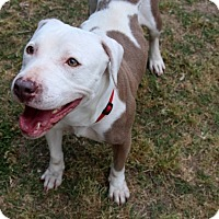 Adopt A Pet :: Colleen - Barnegat, NJ