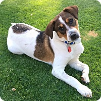Adopt A Pet :: Luke Duke - Scottsdale, AZ