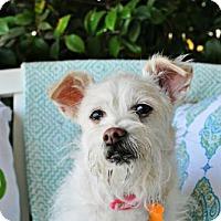 Adopt A Pet :: Molly - Sunnyvale, CA