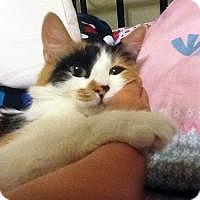Adopt A Pet :: Audrey - Mission Viejo, CA