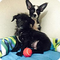 Adopt A Pet :: Lola and Tevis - Imperial Beach, CA