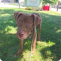Adopt A Pet :: Buford - Rockaway, NJ