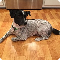 Adopt A Pet :: Daisy - Hagerstown, MD