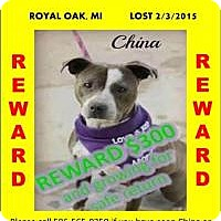Adopt A Pet :: **STILL LOST!** PLEASE SHARE M - Warren, MI