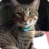 Adopt A Pet :: Mason - Breinigsville, PA
