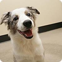 Adopt A Pet :: Ryder - Bellingham, WA