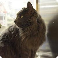 Adopt A Pet :: Antonia - Logan, UT