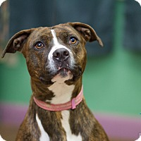 Adopt A Pet :: Asia - Evansville, IN