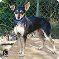 Adopt A Pet :: PRADA - Tomball, TX