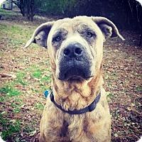 Adopt A Pet :: Rosie - Arlington, VA