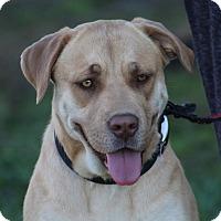 Adopt A Pet :: Goldilocks~adopted! - Glastonbury, CT
