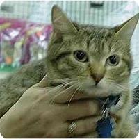 Adopt A Pet :: Hailey - Toledo, OH