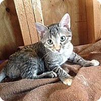 Adopt A Pet :: Addie - Harvey, LA