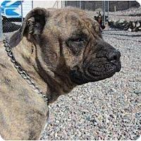 Adopt A Pet :: Mija - Phoenix, AZ