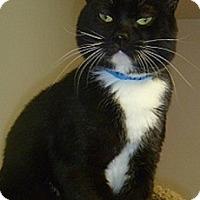 Adopt A Pet :: Misu - Hamburg, NY