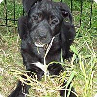 Adopt A Pet :: Dalton - Waller, TX