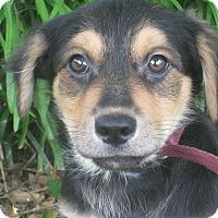 Adopt A Pet :: Fuzzy - Portland, ME