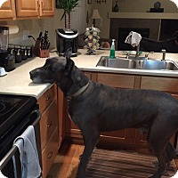 Adopt A Pet :: Eddie (Mr. Ed) - Broomfield, CO